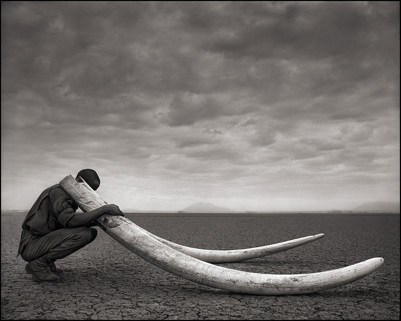 Ranger_with_Tusks_of_Killed_Elephant