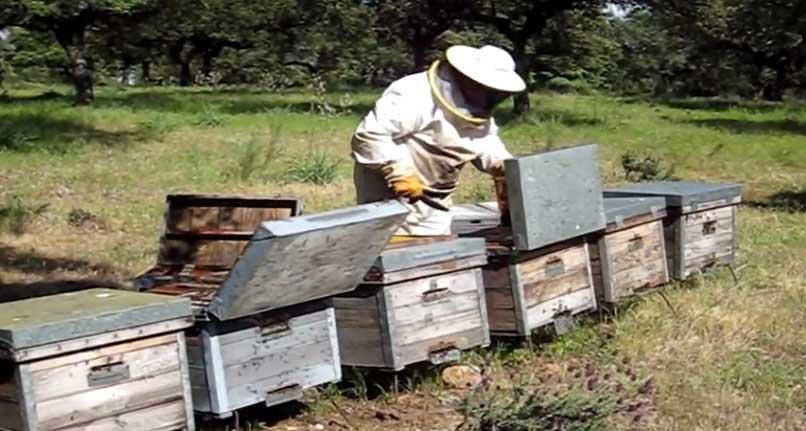 Apaex advierte de la caída de producción y precios de la miel