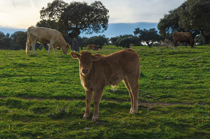 La agricultura y ganadería extremeña se beneficiarán de de una minoración de unos 36 millones por la bajada de módulos del IRPF 2019
