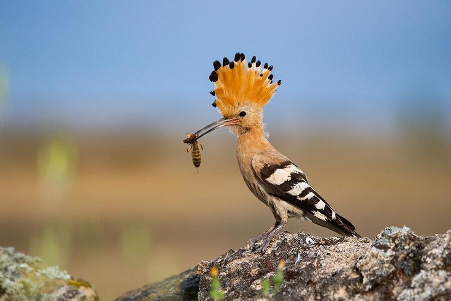 Birding en el Mes de la Reserva de la Biosfera del Tajo Internacional