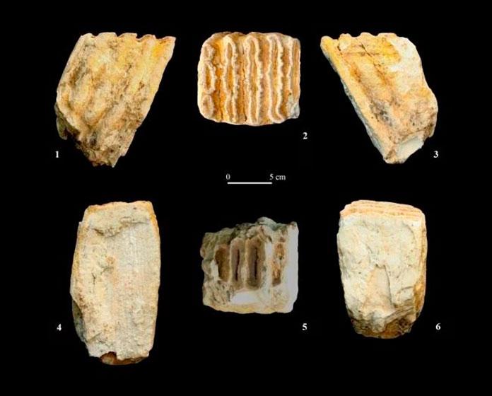 Un proyecto investiga 82 restos fósiles de yacimientos de la península, entre ellos los de Extremadura