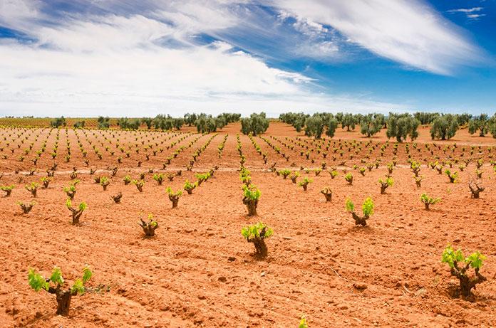 Publicado el anuncio de las ayudas a la promoción del vino extremeño