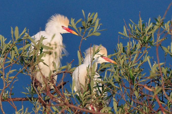 Badajoz muestra en la FIO el poderío ornitológico de la ZEPA urbana más extensa de Europa