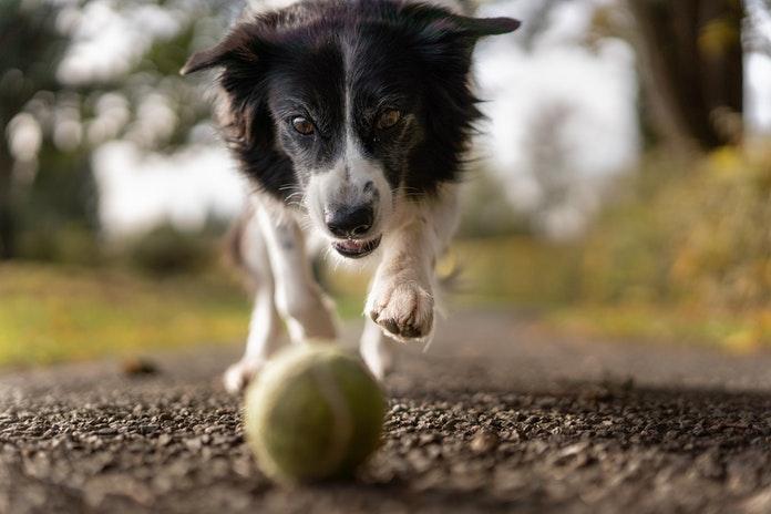 Cáceres aprueba la limpieza de excrementos y la disolución de la orina de las mascotas