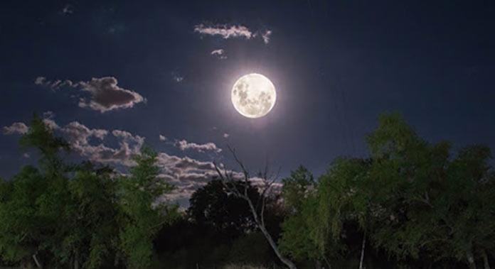 Novedades de Plena Moon