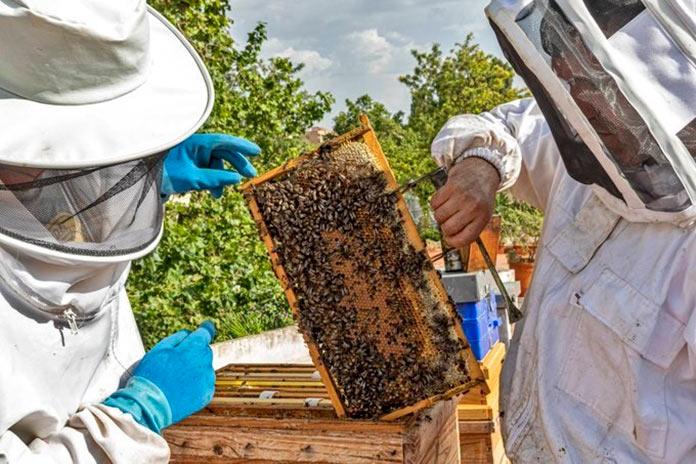 El sector apícola indica que la producción de la miel caerá al 50% por las condiciones climáticas