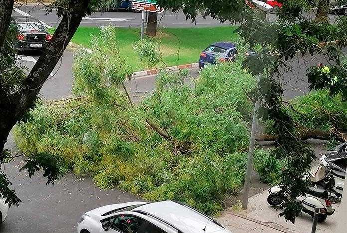 Cortado un carril de Hernán Cortés por la caída de una rama de un árbol